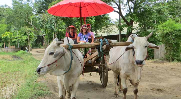 Ox Cart in Cambodia