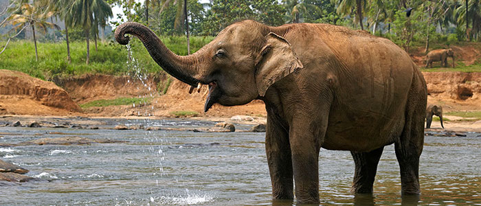 Why s laos called the land of a million elephants - Image elephant ...